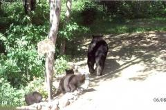 family_of_bear