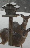 Two guests at the feeder